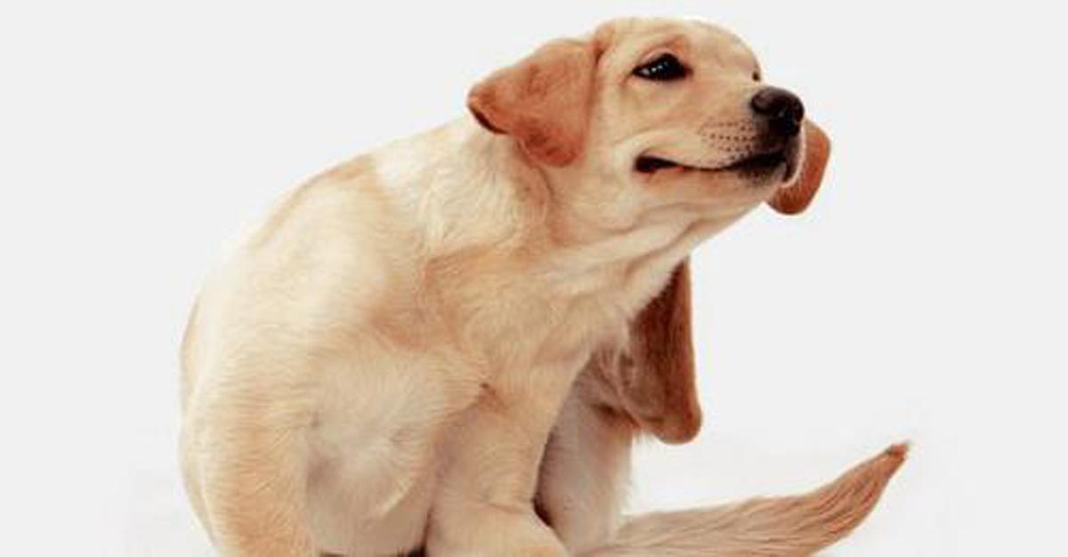 Mas Good nos sigue educando en el cuidado de nuestras mascotas.